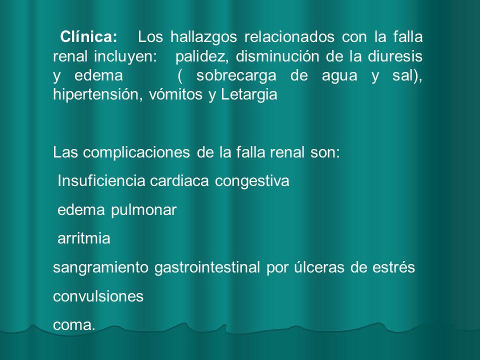Clínica: Los hallazgos relacionados con la falla renal incluyen: palidez, disminución de la diuresis y edema ( sobrecarga de agua y sal), hipertensión, vómitos y Letargia