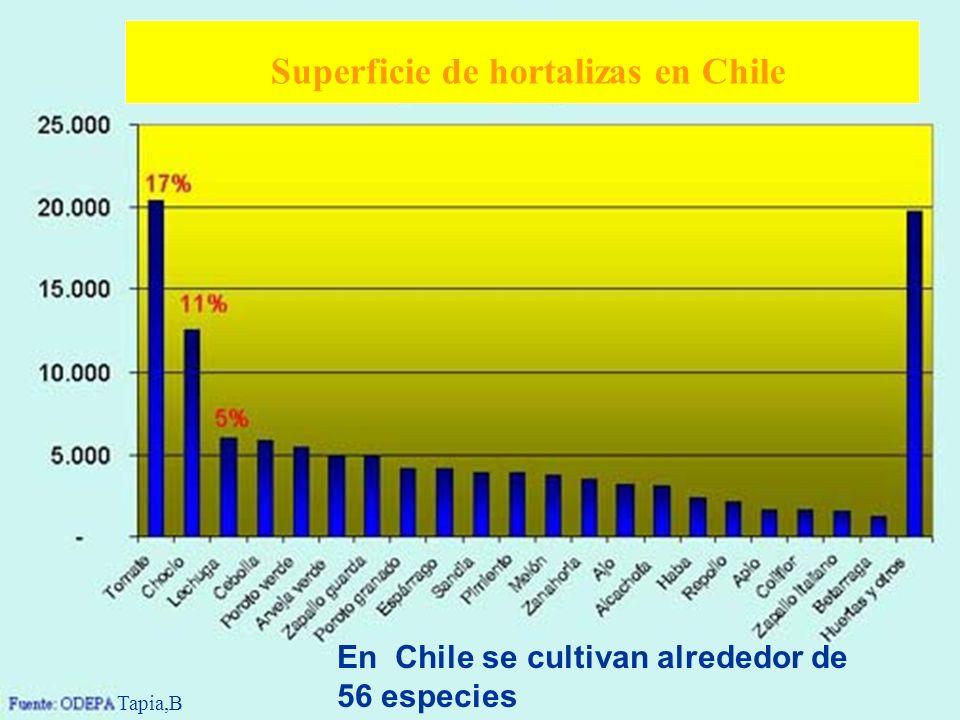 Superficie de hortalizas en Chile