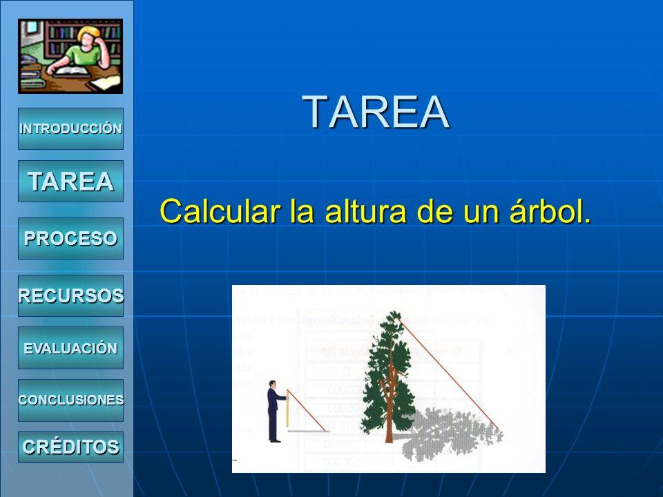 TAREA Calcular la altura de un árbol.