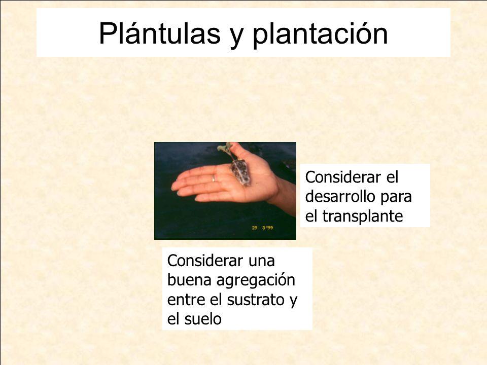 Plántulas y plantación