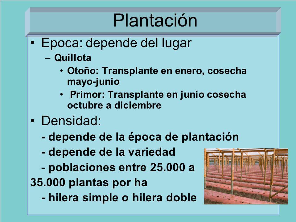 Plantación Epoca: depende del lugar Densidad: