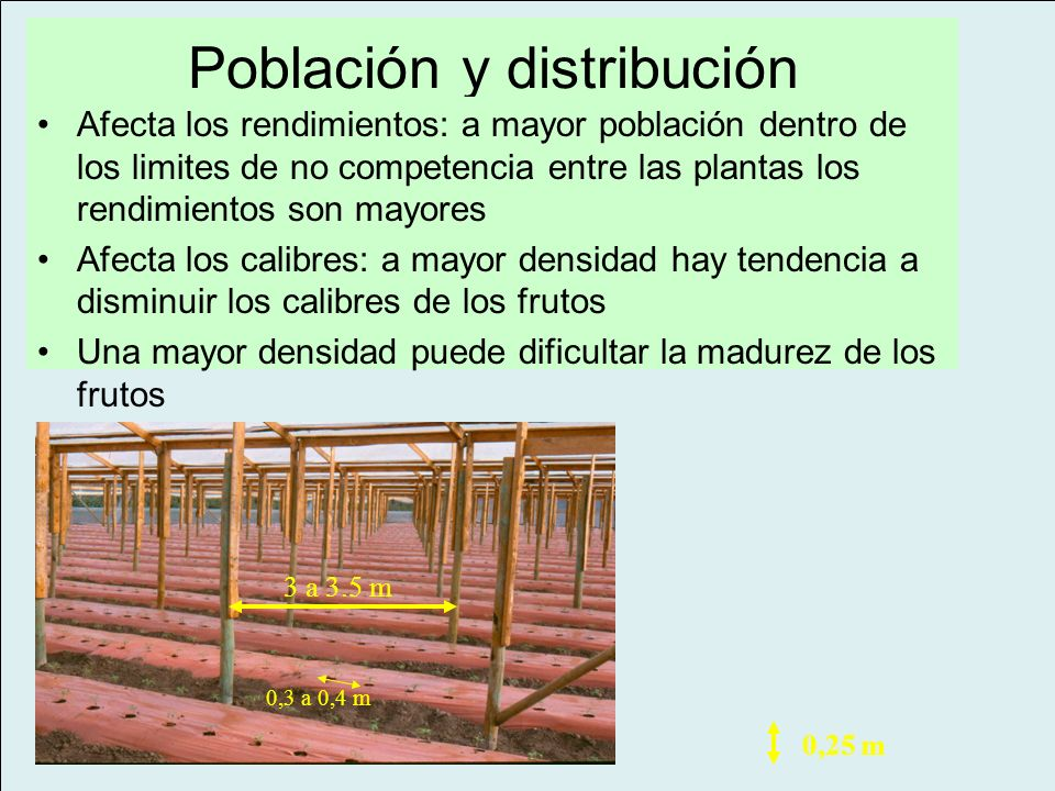 Población y distribución
