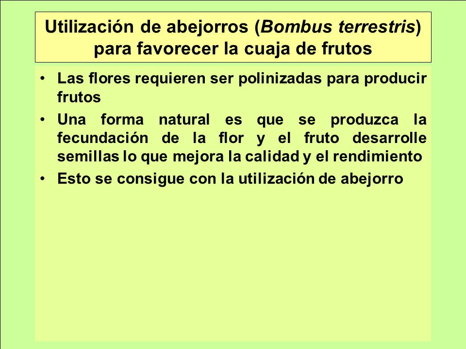 Utilización de abejorros (Bombus terrestris) para favorecer la cuaja de frutos