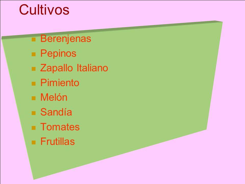 Cultivos Berenjenas Pepinos Zapallo Italiano Pimiento Melón Sandía