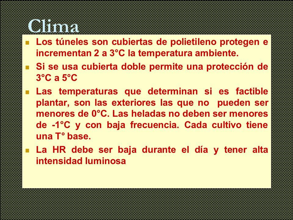 Clima Los túneles son cubiertas de polietileno protegen e incrementan 2 a 3°C la temperatura ambiente.