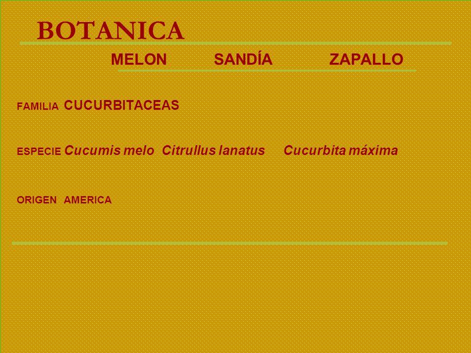 BOTANICA MELON SANDÍA ZAPALLO FAMILIA CUCURBITACEAS