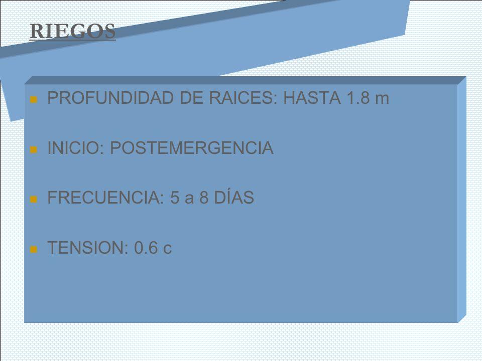 RIEGOS PROFUNDIDAD DE RAICES: HASTA 1.8 m INICIO: POSTEMERGENCIA