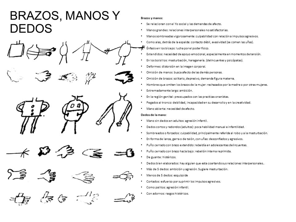 BRAZOS, MANOS Y DEDOS Brazos y manos: