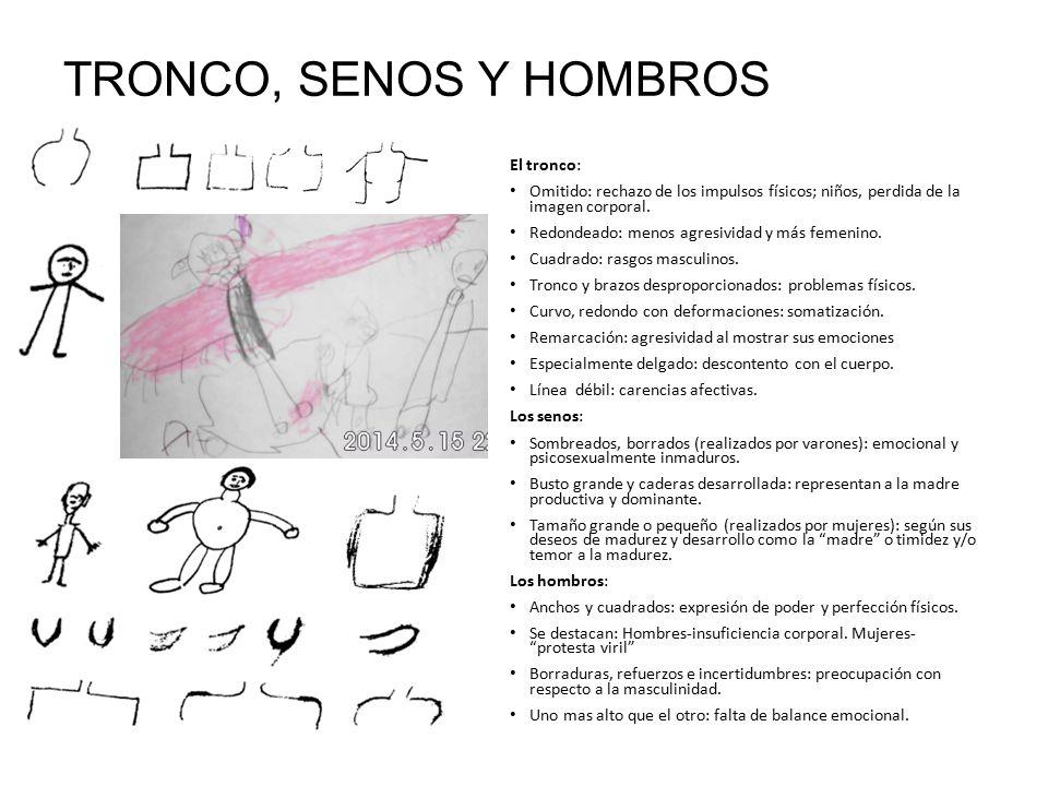 TRONCO, SENOS Y HOMBROS El tronco:
