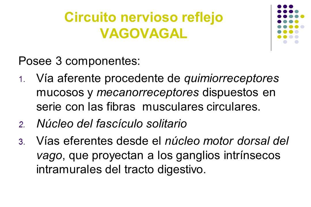 Circuito Nervioso : Secreción pancreática ppt descargar