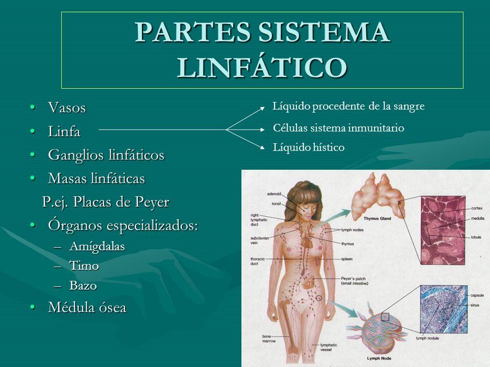 Sistema Circulatorio. - ppt video online descargar