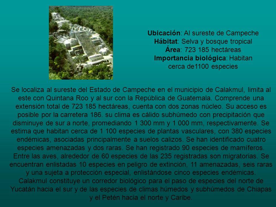 Ubicación: Al sureste de Campeche Hábitat: Selva y bosque tropical