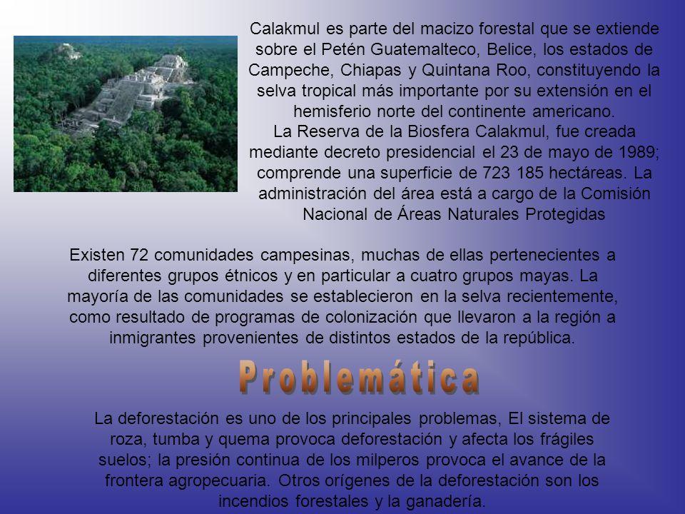 Calakmul es parte del macizo forestal que se extiende sobre el Petén Guatemalteco, Belice, los estados de Campeche, Chiapas y Quintana Roo, constituyendo la selva tropical más importante por su extensión en el hemisferio norte del continente americano.