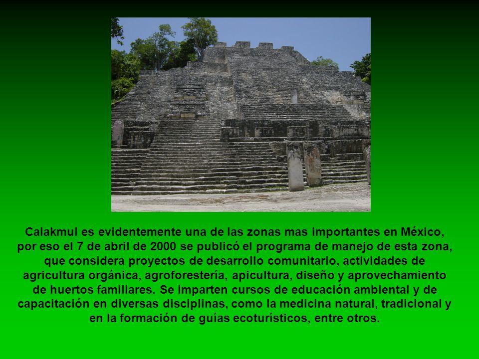 Calakmul es evidentemente una de las zonas mas importantes en México, por eso el 7 de abril de 2000 se publicó el programa de manejo de esta zona, que considera proyectos de desarrollo comunitario, actividades de agricultura orgánica, agroforestería, apicultura, diseño y aprovechamiento de huertos familiares.