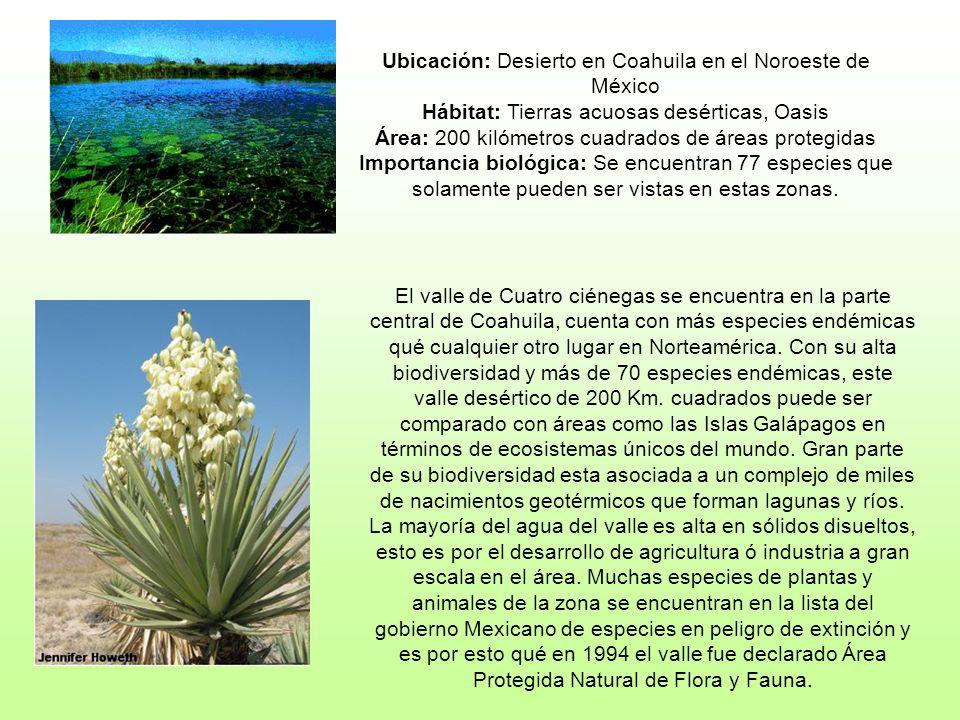 Ubicación: Desierto en Coahuila en el Noroeste de México