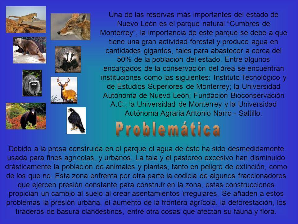 Una de las reservas más importantes del estado de Nuevo León es el parque natural Cumbres de Monterrey , la importancia de este parque se debe a que tiene una gran actividad forestal y produce agua en cantidades gigantes, tales para abastecer a cerca del 50% de la población del estado. Entre algunos encargados de la conservación del área se encuentran instituciones como las siguientes: Instituto Tecnológico y de Estudios Superiores de Monterrey; la Universidad Autónoma de Nuevo León; Fundación Bioconservación A.C.; la Universidad de Monterrey y la Universidad Autónoma Agraria Antonio Narro - Saltillo.