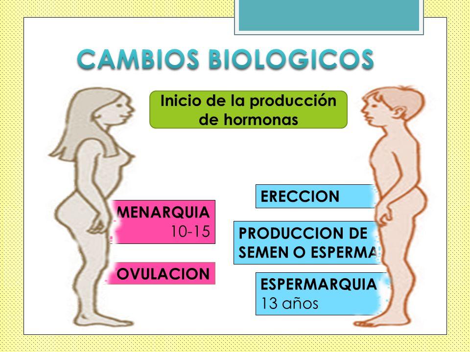 Inicio de la producción de hormonas