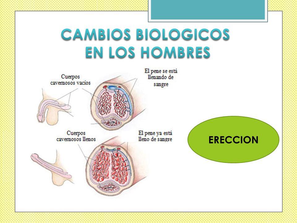 CAMBIOS BIOLOGICOS EN LOS HOMBRES