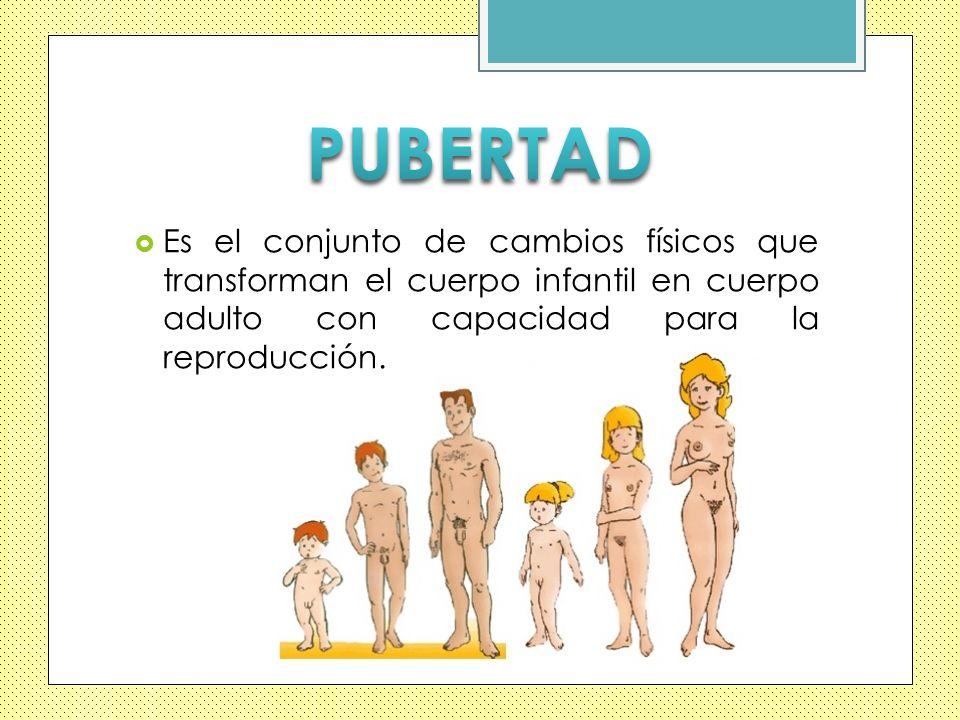 PUBERTAD Es el conjunto de cambios físicos que transforman el cuerpo infantil en cuerpo adulto con capacidad para la reproducción.