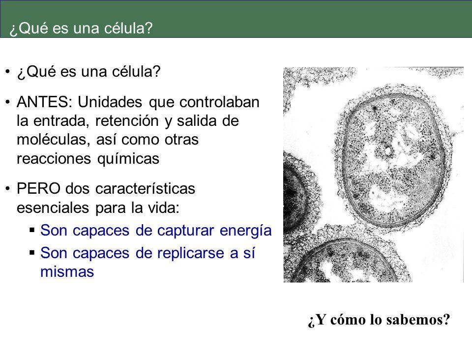 ¿Qué es una célula ¿Qué es una célula
