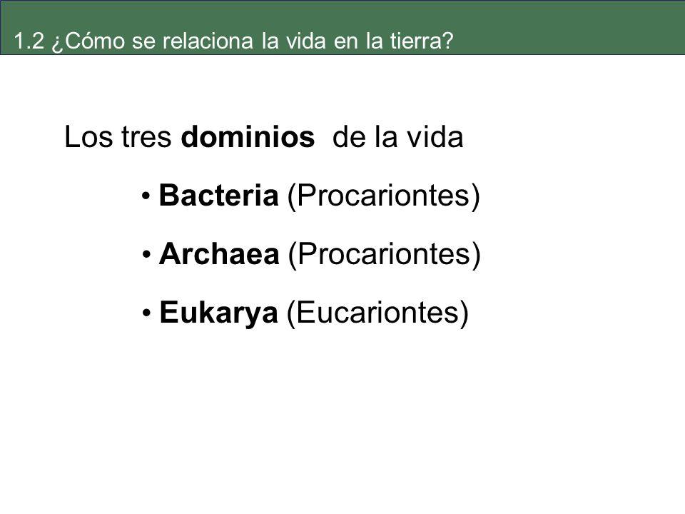 Los tres dominios de la vida • Bacteria (Procariontes)
