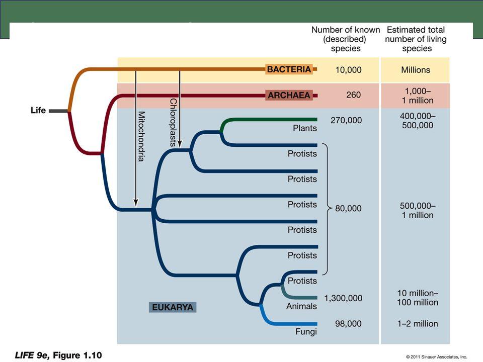 El árbol de la vida: simplificado