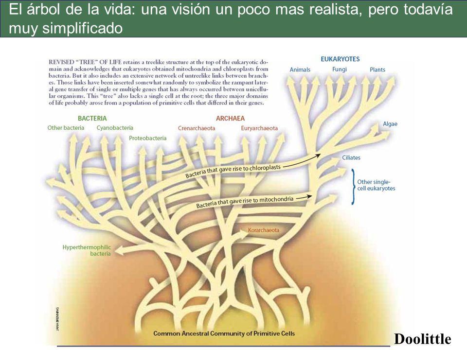 El árbol de la vida: una visión un poco mas realista, pero todavía muy simplificado