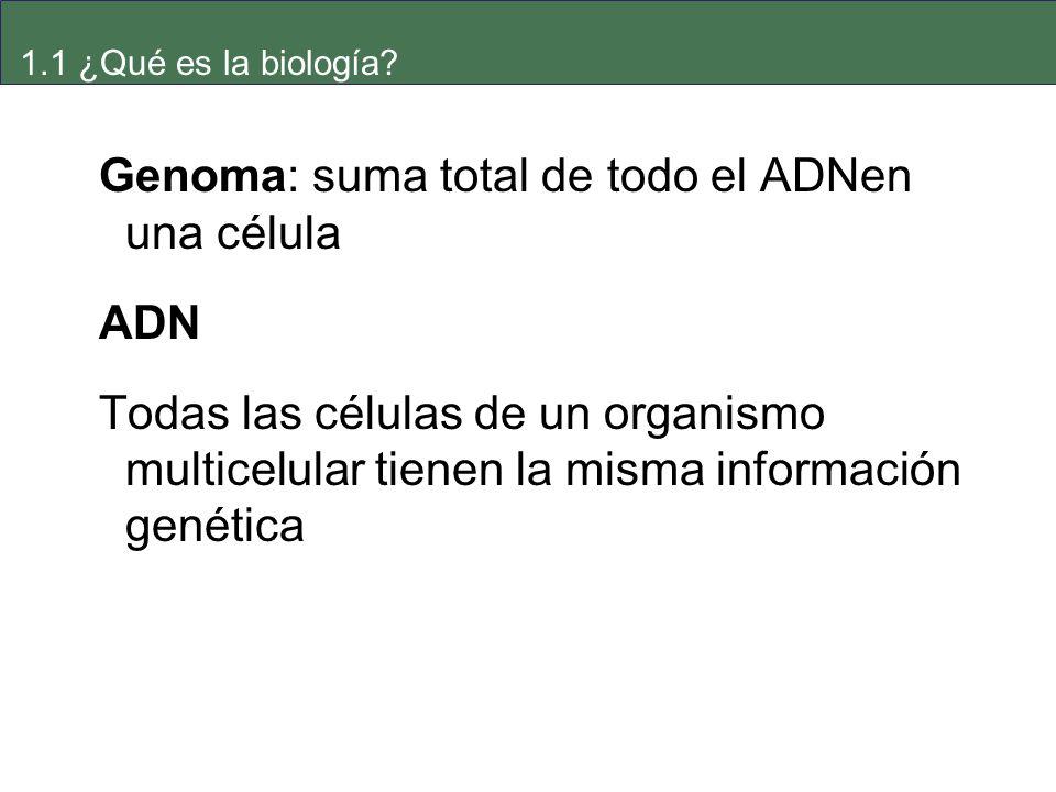 Genoma: suma total de todo el ADNen una célula ADN