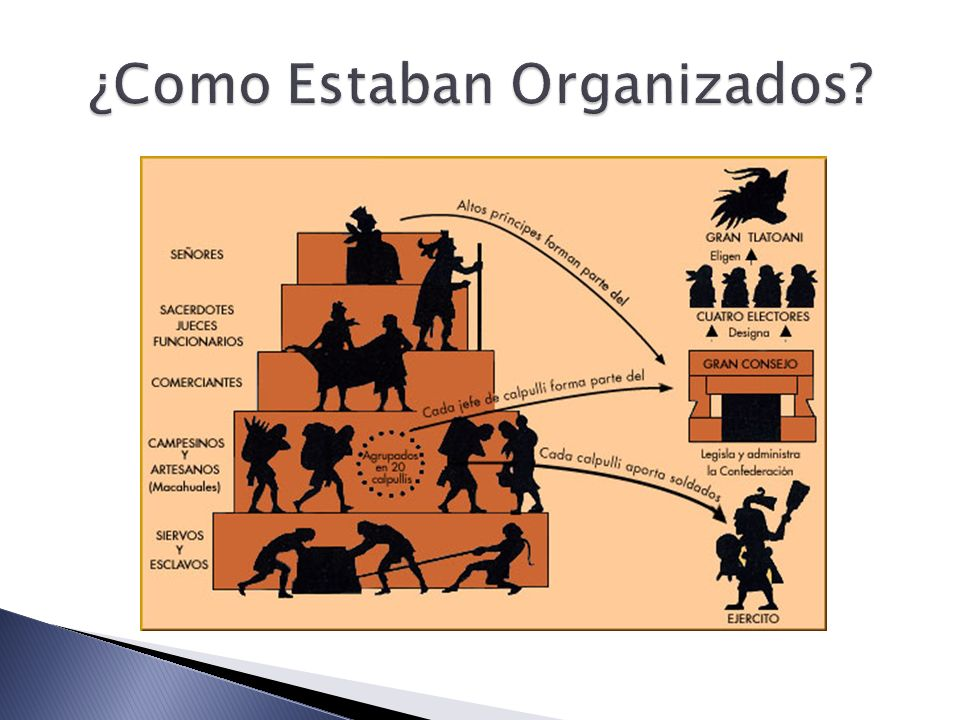¿Como Estaban Organizados
