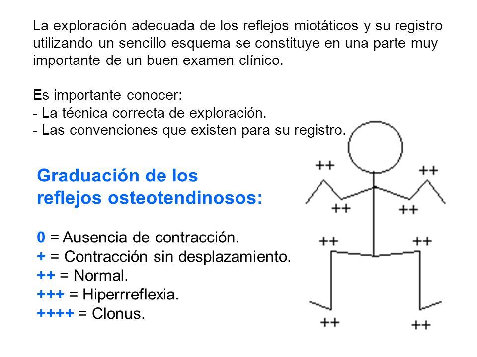 La exploración adecuada de los reflejos miotáticos y su registro utilizando un sencillo esquema se constituye en una parte muy importante de un buen examen clínico.