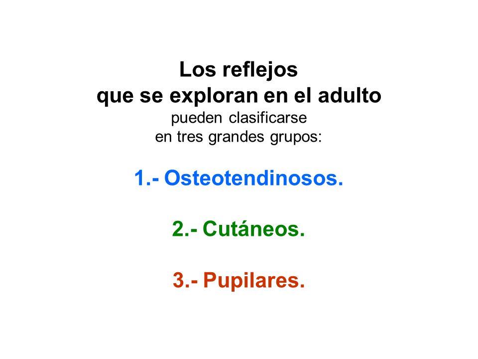 Los reflejos 1.- Osteotendinosos. 2.- Cutáneos.