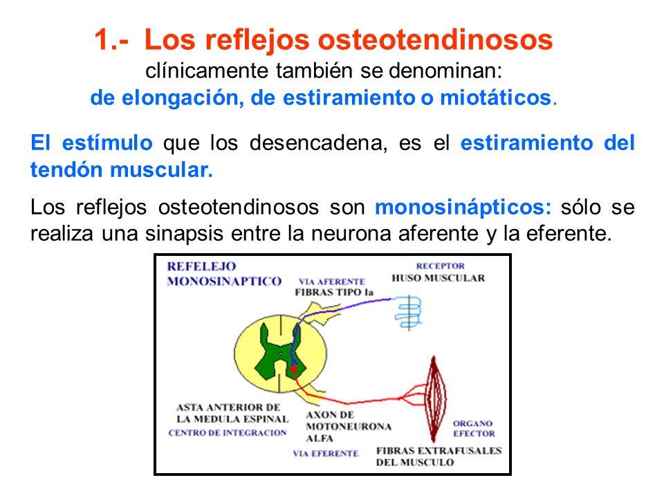 1.- Los reflejos osteotendinosos