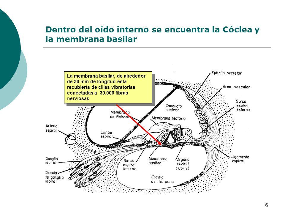 Dentro del oído interno se encuentra la Cóclea y la membrana basilar