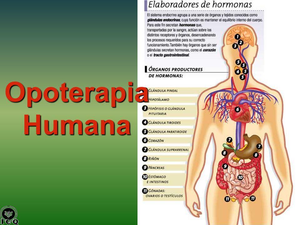 Opoterapia Humana