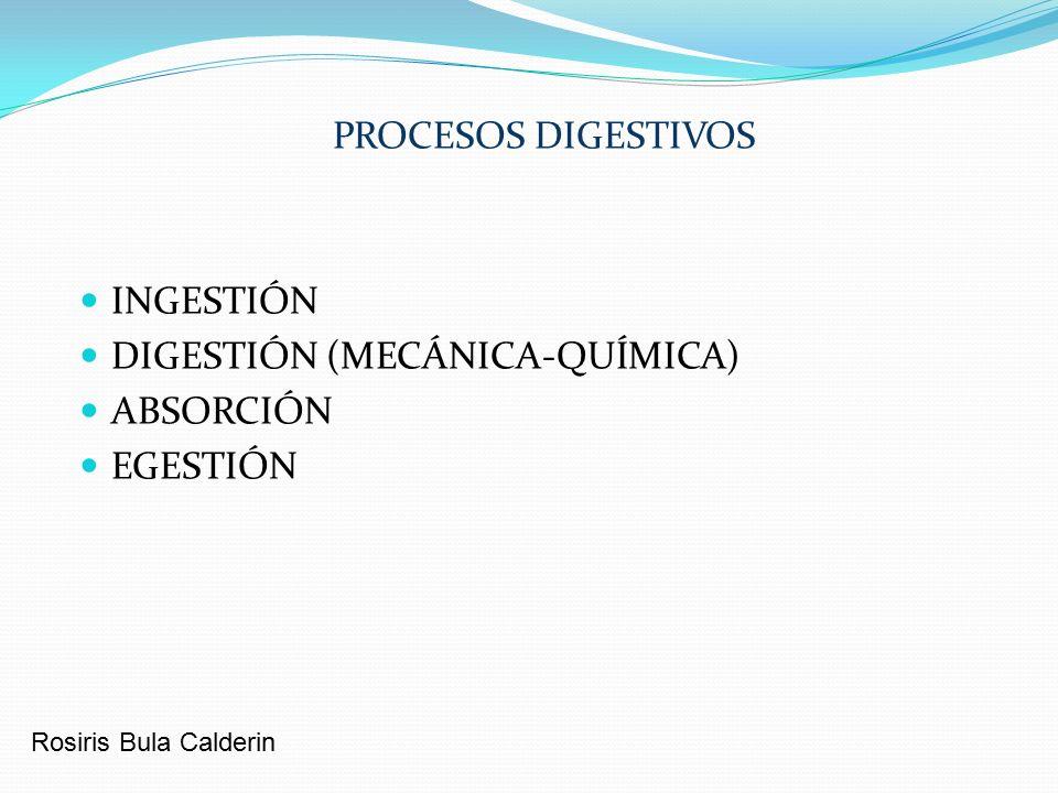 DIGESTIÓN (MECÁNICA-QUÍMICA) ABSORCIÓN EGESTIÓN - ppt video online ...