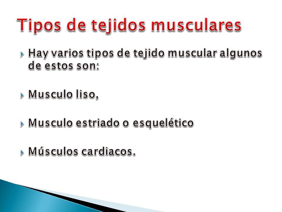 Exposici n del tejido muscular ppt video online descargar - Tipos de tejados ...