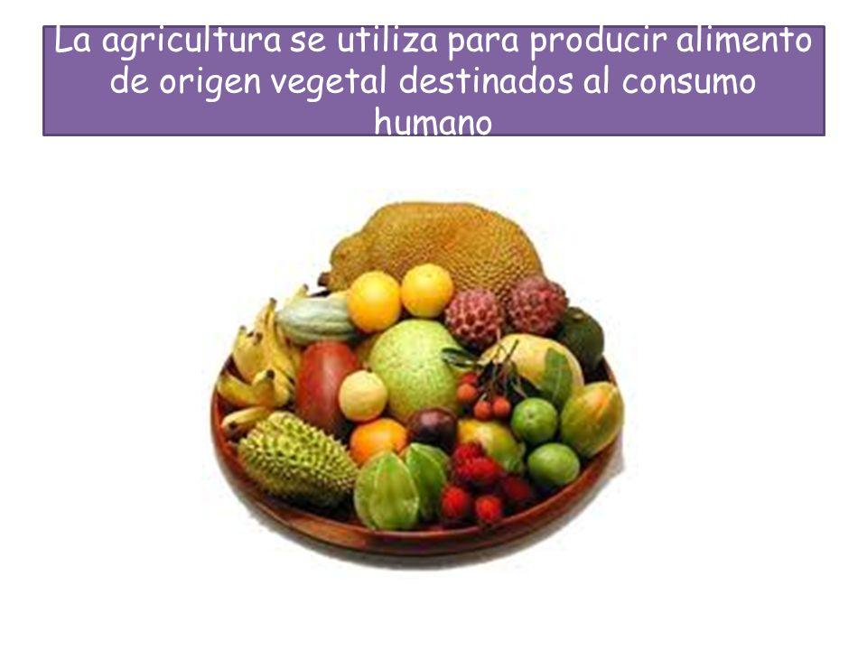 La agricultura se utiliza para producir alimento de origen vegetal destinados al consumo humano