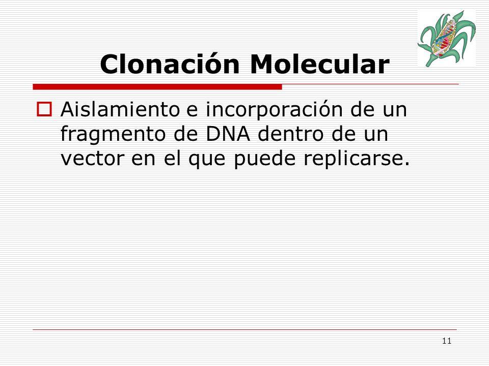 Clonación Molecular Aislamiento e incorporación de un fragmento de DNA dentro de un vector en el que puede replicarse.