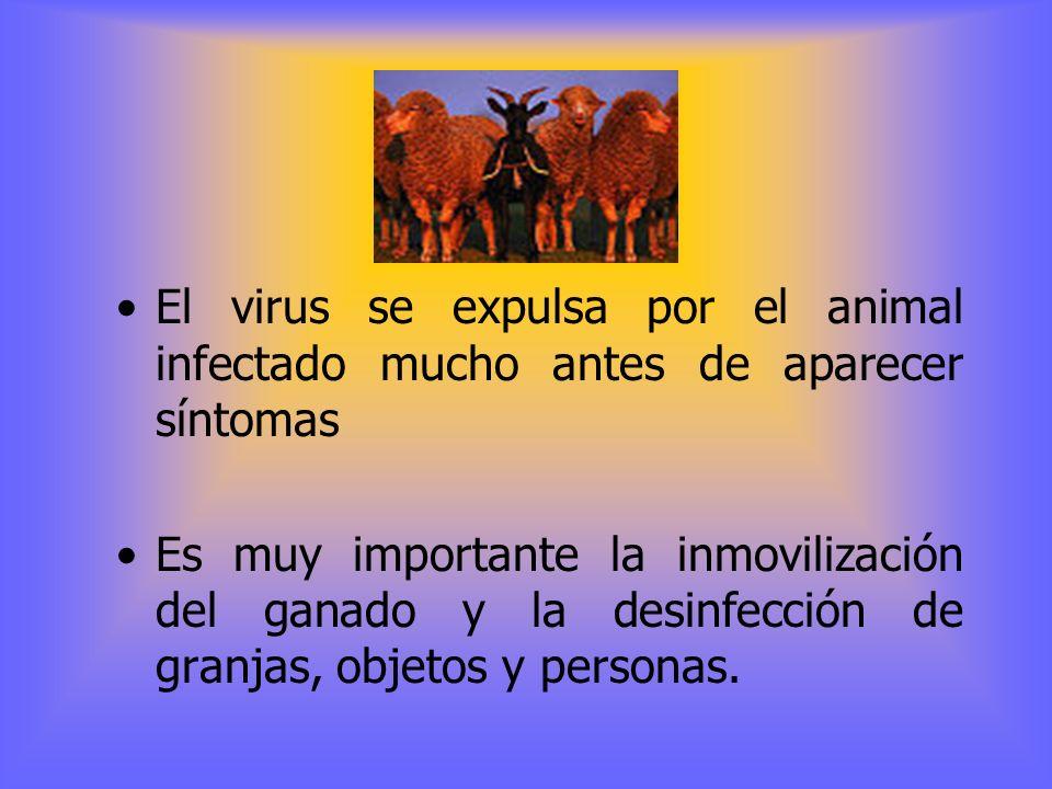 El virus se expulsa por el animal infectado mucho antes de aparecer síntomas