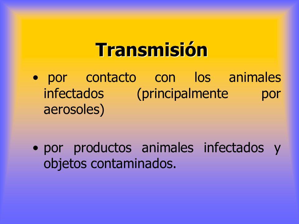 Transmisión por contacto con los animales infectados (principalmente por aerosoles) por productos animales infectados y objetos contaminados.