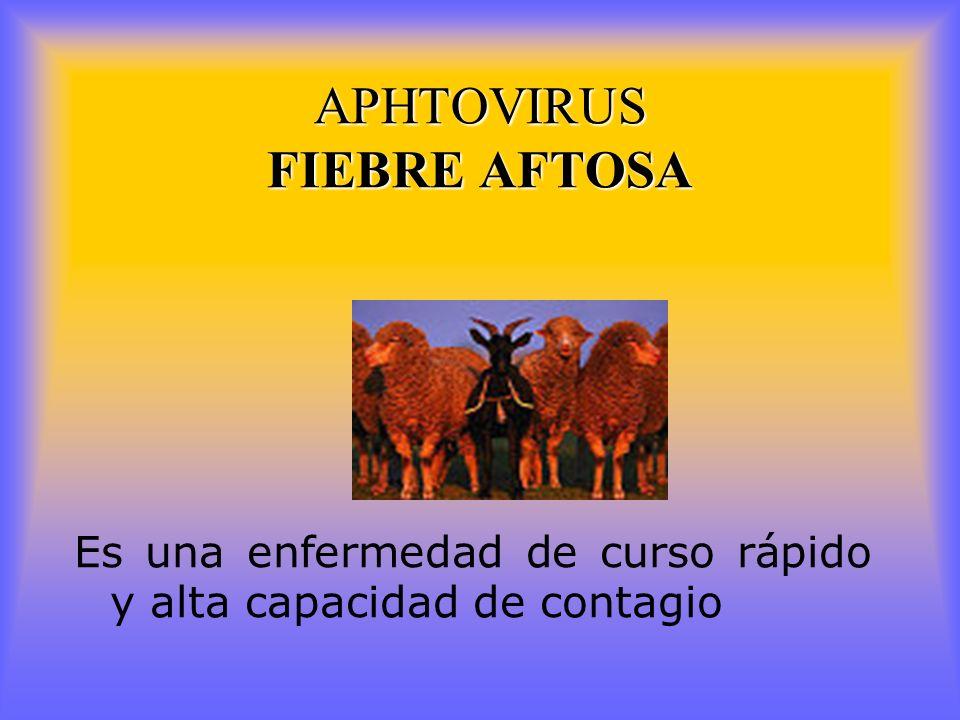 APHTOVIRUS FIEBRE AFTOSA