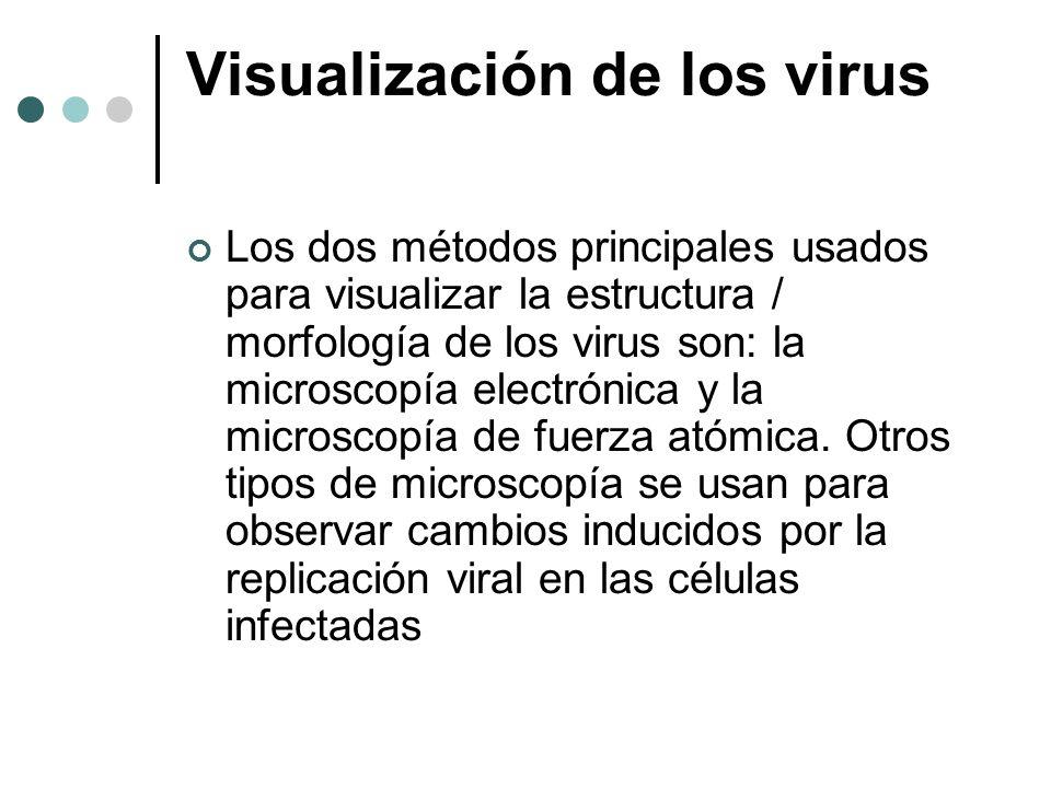 Visualización de los virus