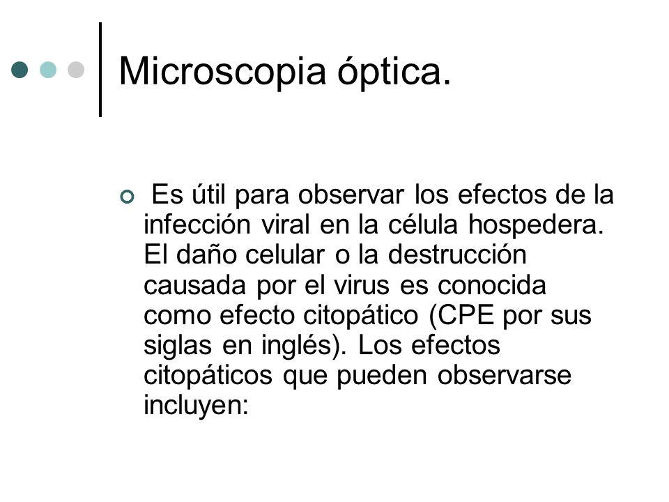 Microscopia óptica.