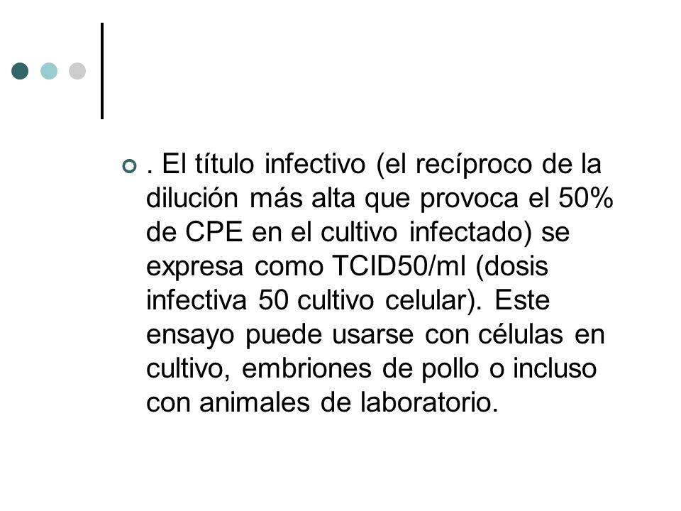 El título infectivo (el recíproco de la dilución más alta que provoca el 50% de CPE en el cultivo infectado) se expresa como TCID50/ml (dosis infectiva 50 cultivo celular).