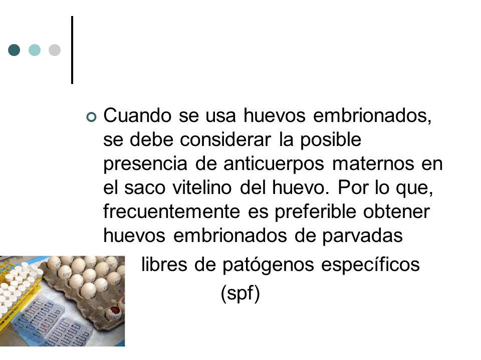 Cuando se usa huevos embrionados, se debe considerar la posible presencia de anticuerpos maternos en el saco vitelino del huevo. Por lo que, frecuentemente es preferible obtener huevos embrionados de parvadas