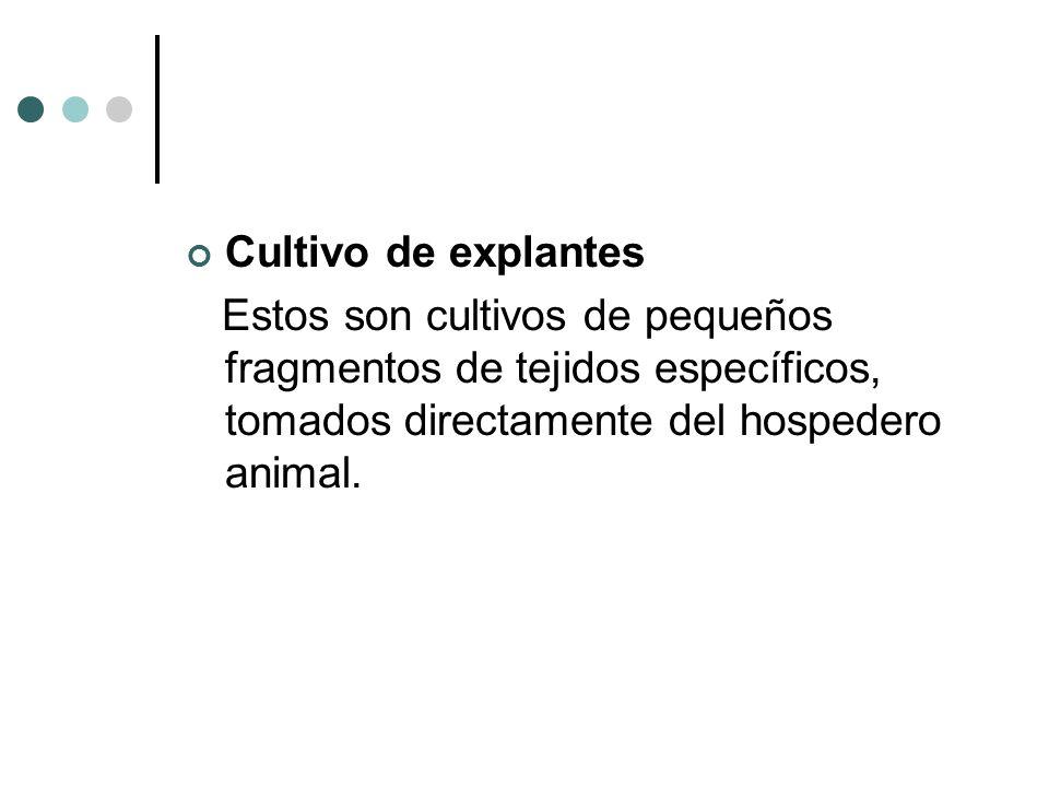 Cultivo de explantesEstos son cultivos de pequeños fragmentos de tejidos específicos, tomados directamente del hospedero animal.