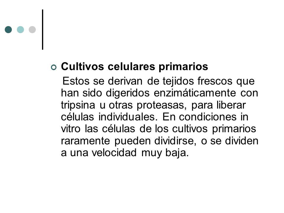 Cultivos celulares primarios