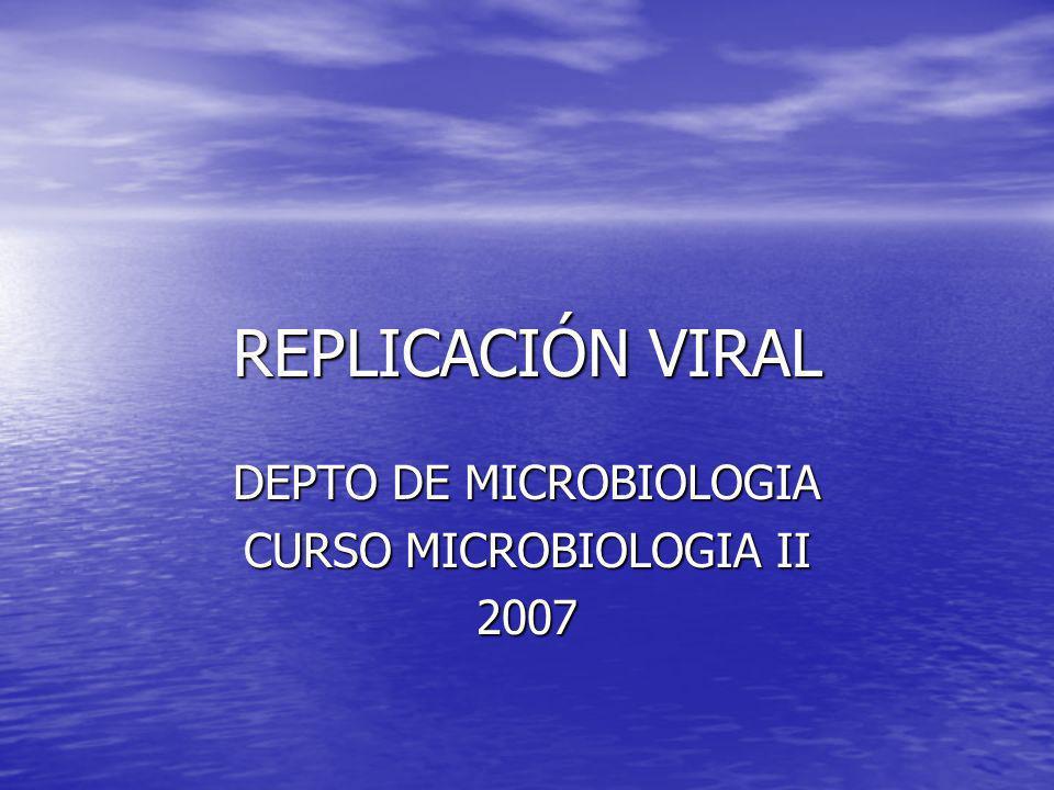 DEPTO DE MICROBIOLOGIA CURSO MICROBIOLOGIA II 2007