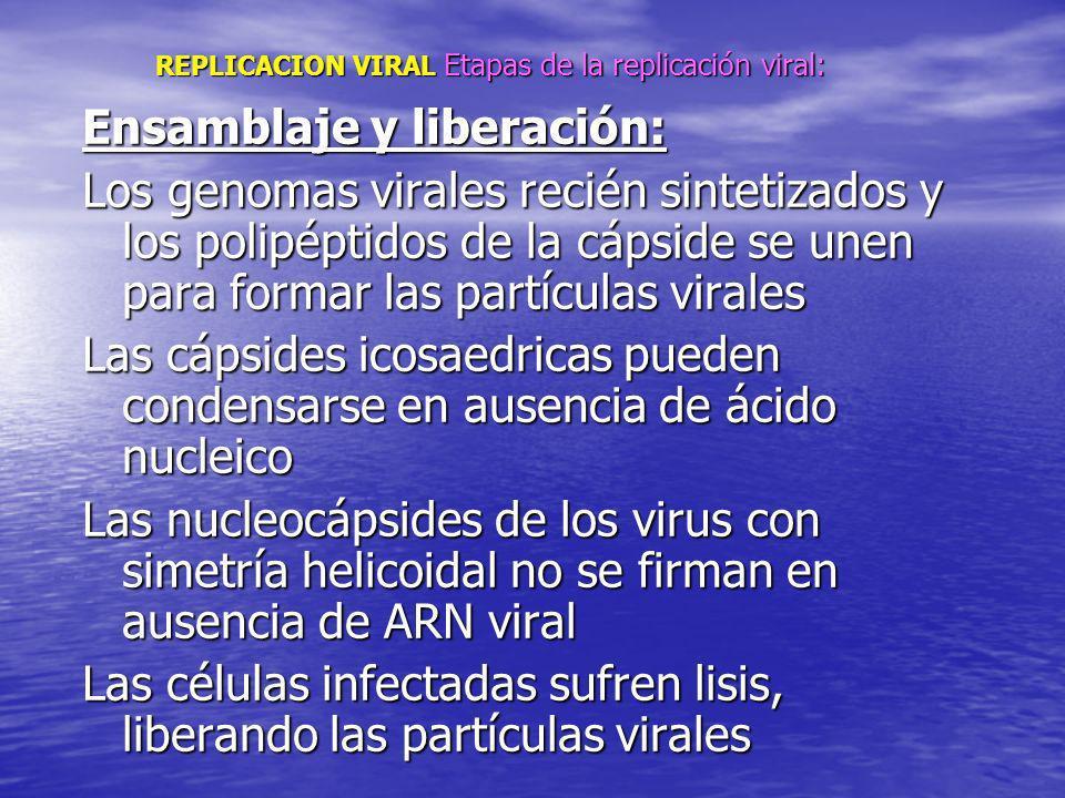 REPLICACION VIRAL Etapas de la replicación viral: