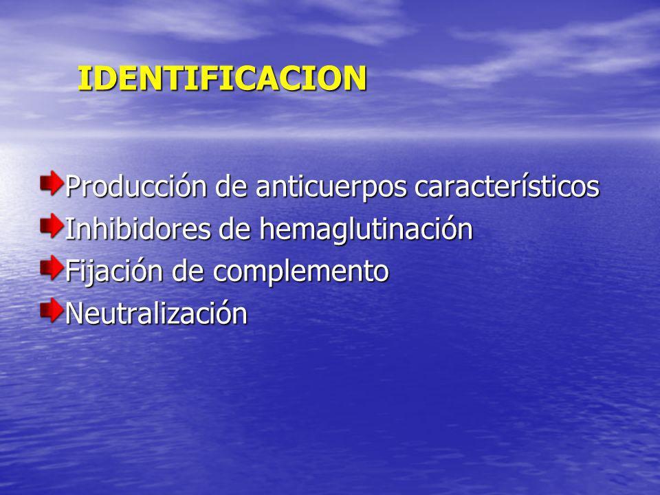 IDENTIFICACION Producción de anticuerpos característicos